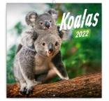 PGP-30116-V - Poznámkový kalendár Koaly 2022, 30 × 30 cm